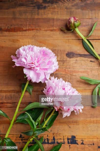 Pink peonies on wood