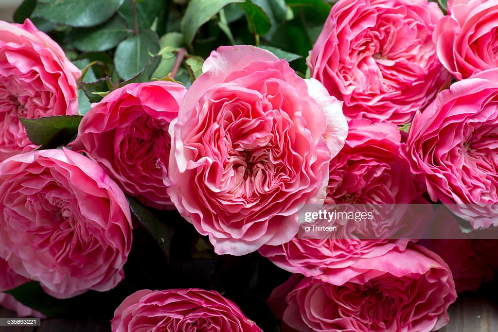 pink peony flowers : Stock Photo