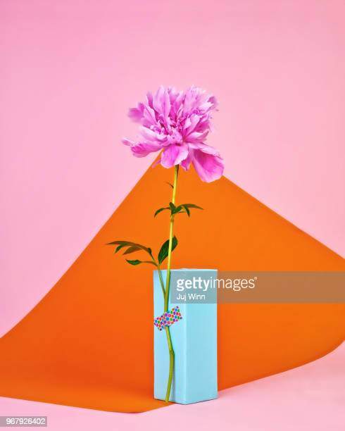 pink peony in bloom - ikebana stock pictures, royalty-free photos & images