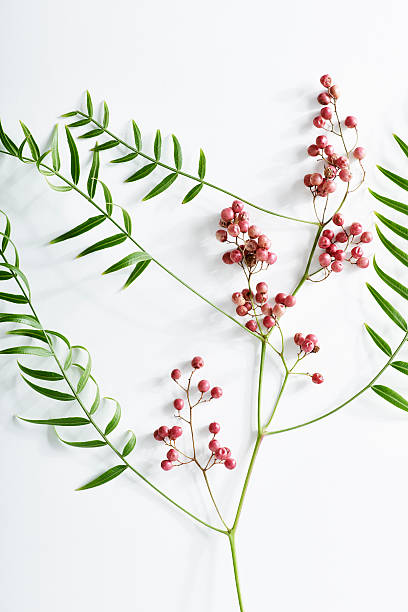 Pink Peppercorn Branch On White Background. Wall Art