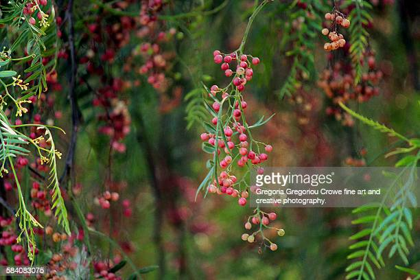 pink peppercorn tree - gregoria gregoriou crowe fine art and creative photography. stock pictures, royalty-free photos & images