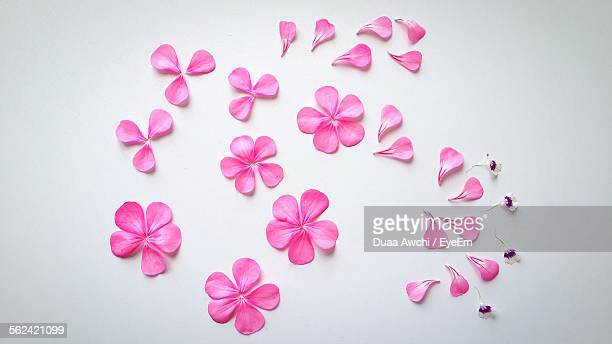 Pink Petals On White Background