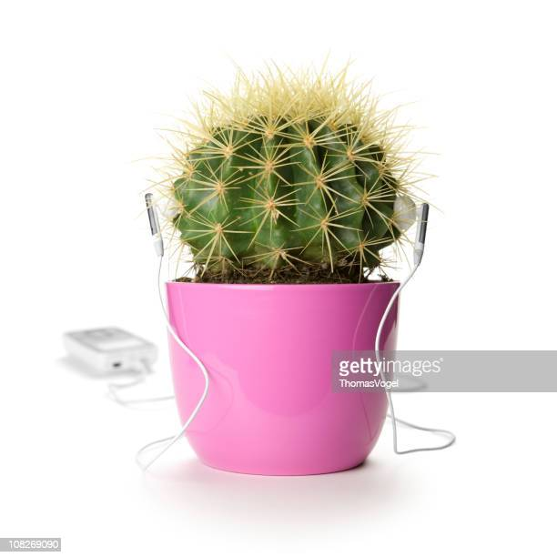 Pink pot cactus listening to music