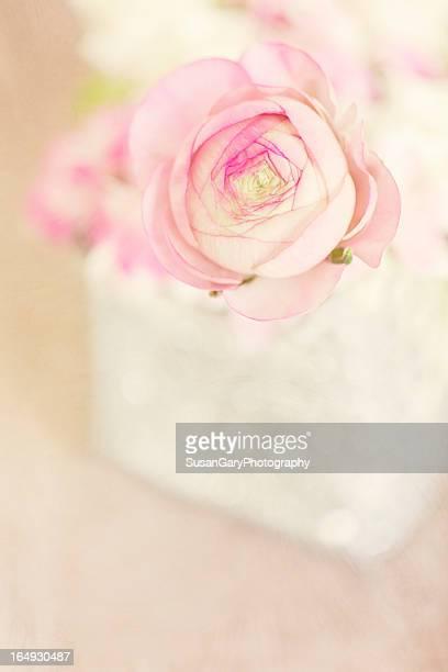 Pink Ranunculus in Silver Vase