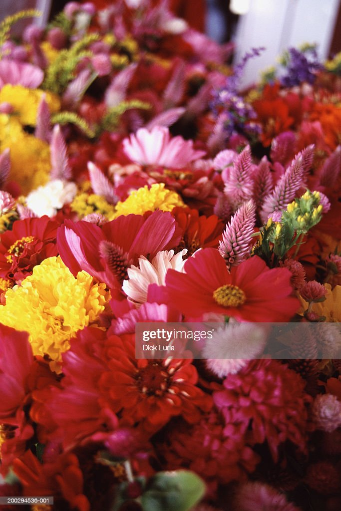 Pink Red Yellow Flowers Stock Foto Getty Images