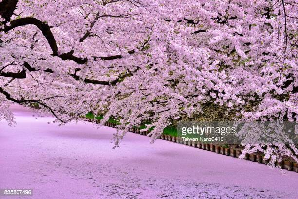 pink river - aomori prefecture stock pictures, royalty-free photos & images