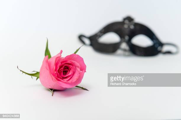 pink rose and black mask - black mask disguise stock pictures, royalty-free photos & images