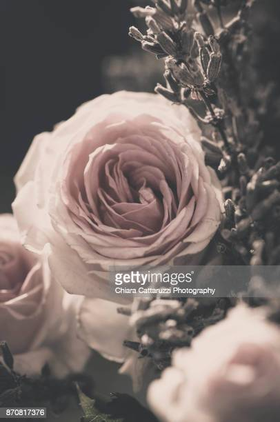 pink rose flower and lavender - pale pink stock pictures, royalty-free photos & images