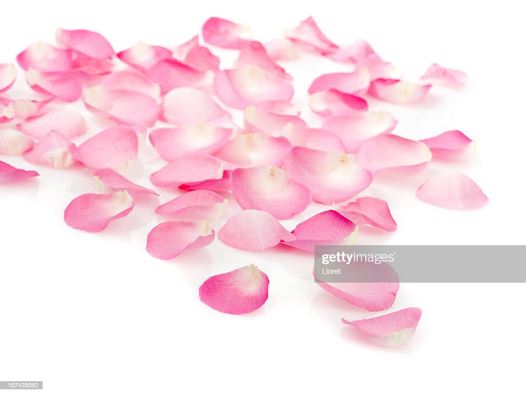 Rose Petals Stock Photos And Pictures Getty Images
