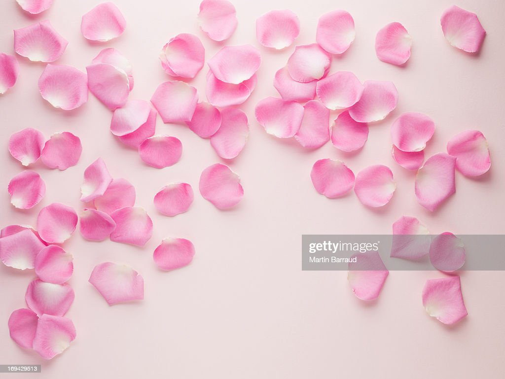 Pink rose petals : Stock Photo