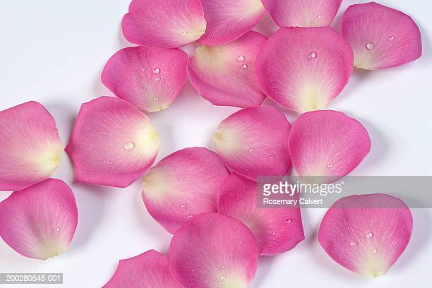Pink rose petals scattered over white surface, close-up