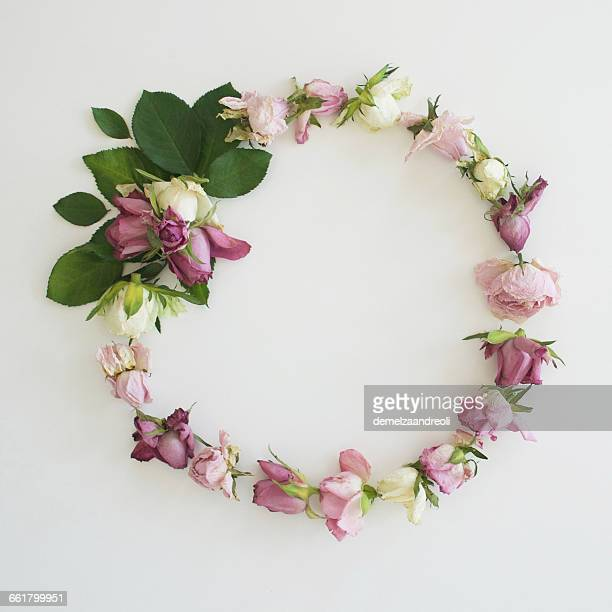 Pink Rose wreath on white background