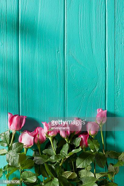 Pink roses against an old wooden board wall.