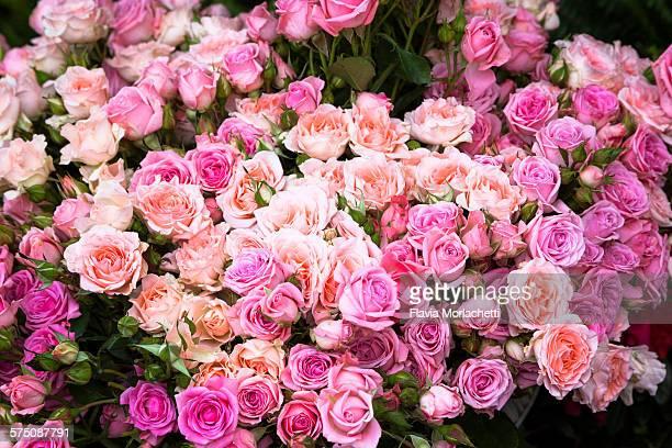 Pink roses at street market