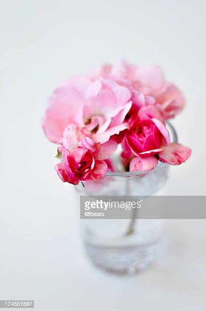 pink roses in a clear vase - sofia rose stock photos and pictures