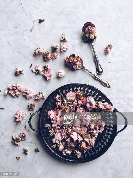 pink roses on a pewter dish and a small snail - julia rose stock photos and pictures