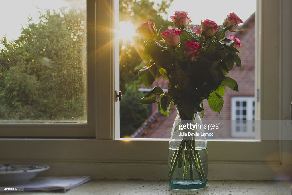 Pink roses on window sill : Stock Photo