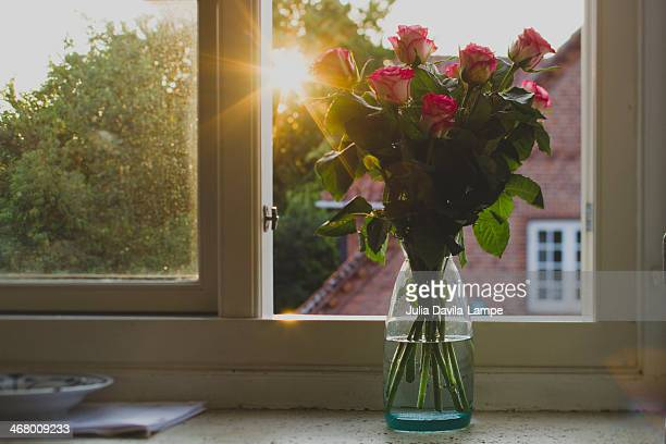 pink roses on window sill - julia rose stock photos and pictures