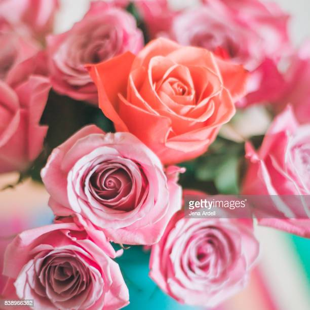pink roses - jena rose stock pictures, royalty-free photos & images
