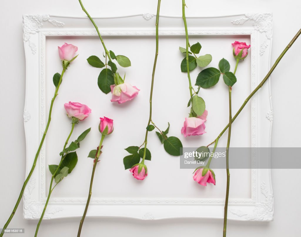 Pink Roses Scattered Within A White Picture Frame On A White ...