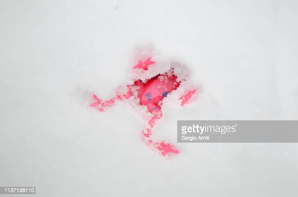 Pink rubber frog buried in snow