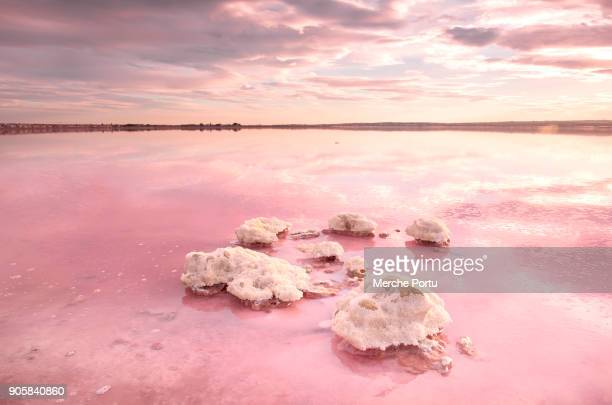 pink saltwater lagoon of torrevieja - lagoon stock pictures, royalty-free photos & images