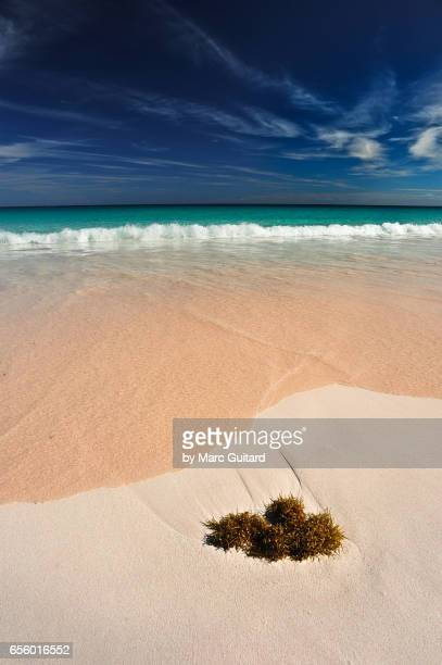 pink sands beach, harbour island, bahamas - harbor island bahamas stock photos and pictures