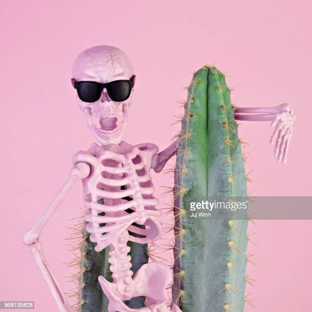 pink skeleton with cactus - human skeleton stock photos and pictures