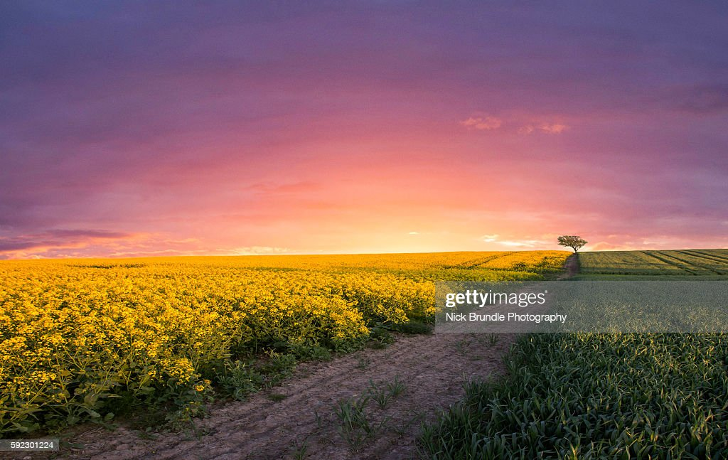 Pink Sky At Night : Stock Photo