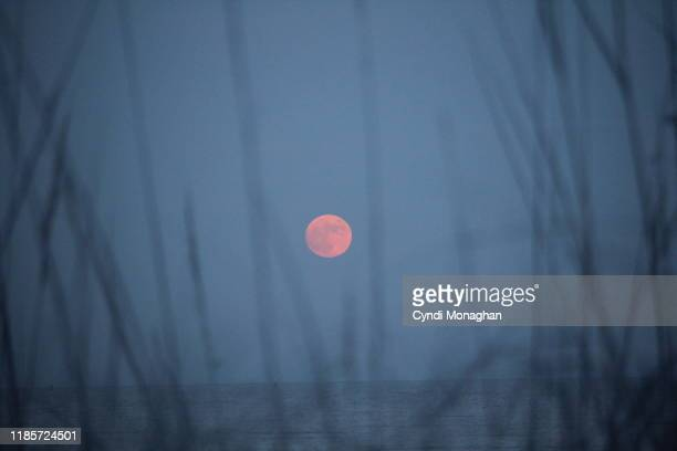 pink sturgeon full moon over the ocean - pink moon stock pictures, royalty-free photos & images