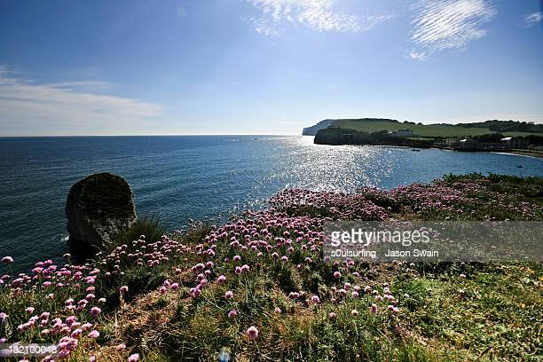 pink thrift wildflowers on cliffs - s0ulsurfing stock pictures, royalty-free photos & images