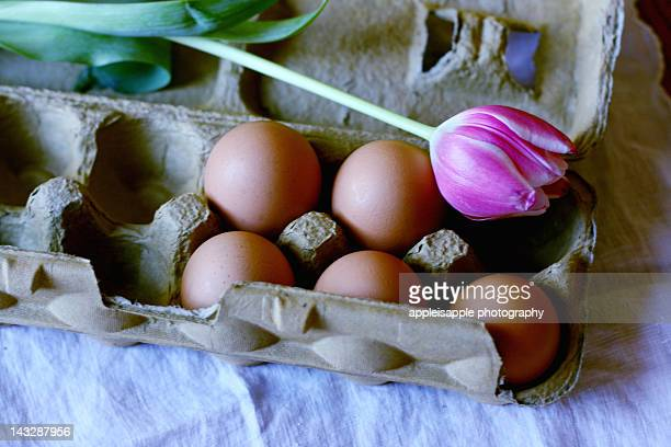 Pink tulip and eggs