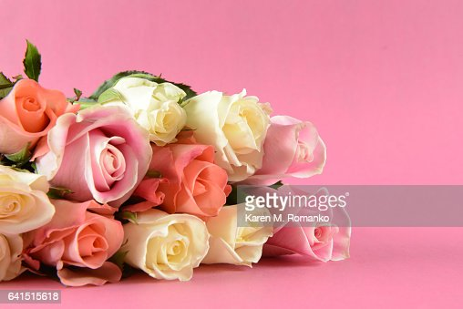 pink white peach roses laying on side mauve background high res stock photo getty images https www gettyimages ca detail photo pink white peach roses laying on side mauve royalty free image 641515618