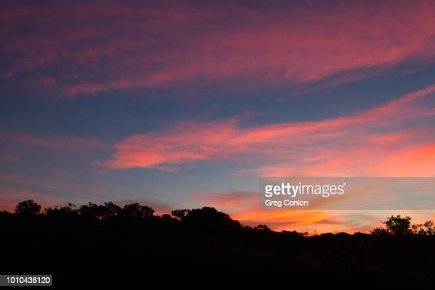 pink wispy clouds on a blue sky with silhouetted tree-tops in the foreground - dusk stock pictures, royalty-free photos & images