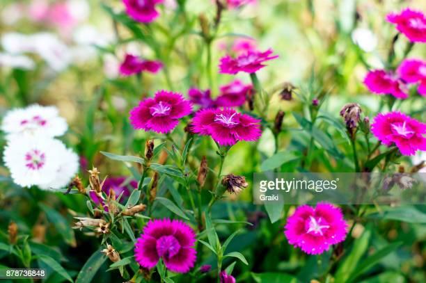 Pink/purple flower immersion
