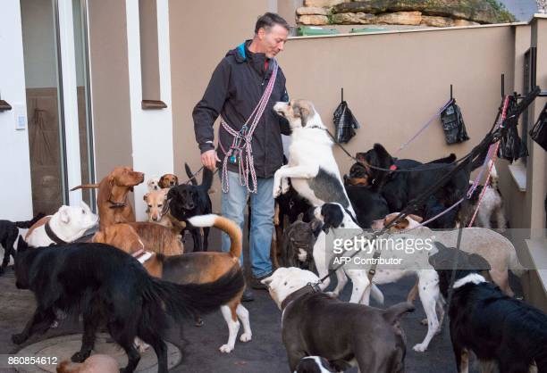 Pino Puglisi owner of dog hotel Paradiso greets his fourlegged guests prior to the morning walk in Ludwigsburg southwestern Germany on a October 13...