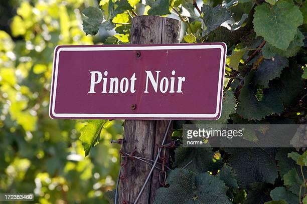 pinot noir - pinot noir grape stock photos and pictures