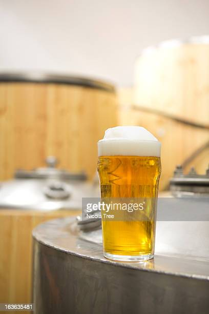 A pint of beer freshly brewed larger in a brewery
