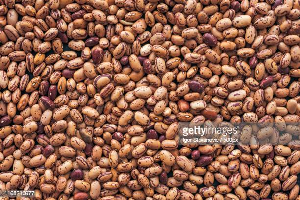 pinto bean from above - pinto bean stock pictures, royalty-free photos & images