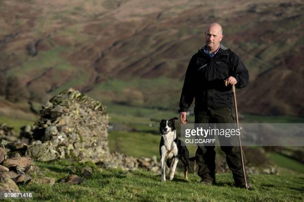 Pip Simpson a sheep farmer from Troutbeck in Westmorland poses in his farm on Wansfell a hill in the Lake District National Park near the town of...
