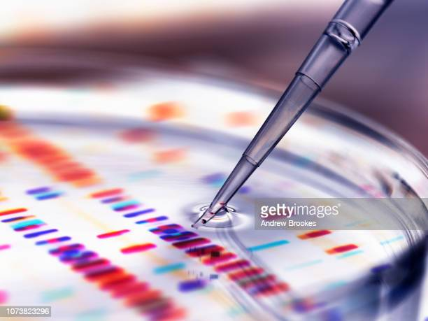 pipette adding sample to petri dish with dna profiles in background - science and technology stock pictures, royalty-free photos & images