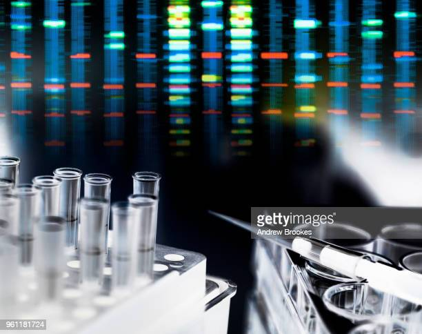 Pipette on multi well plate awaiting DNA samples during a genetic experiment in the laboratory with the DNA profile results in the background