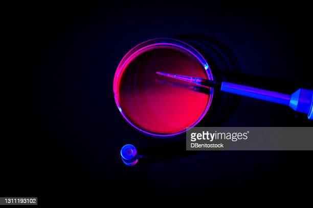 pipette resting on a petri dish with rose liquid - discovery stock pictures, royalty-free photos & images