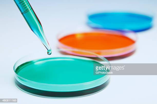 pipetting coloured liquid into petri dishes - petrischale stock-fotos und bilder