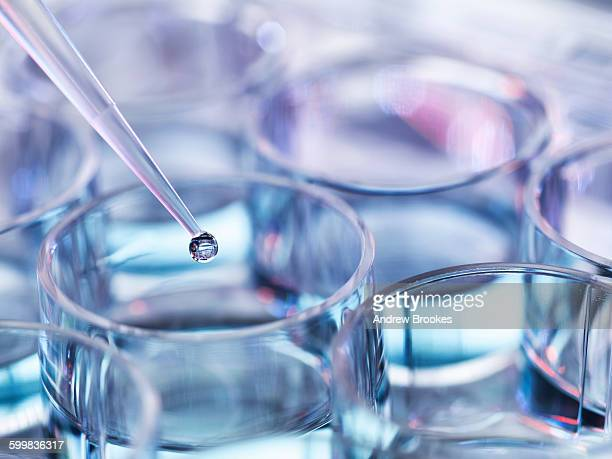 pipetting droplets of liquid into multiwell dish, high angle view - glass material stock pictures, royalty-free photos & images