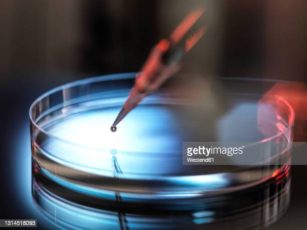 pipetting sample into petri dish at laboratory - dark stock pictures, royalty-free photos & images