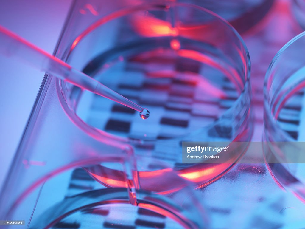 Pipetting sample into tray for DNA testing : Stock Photo
