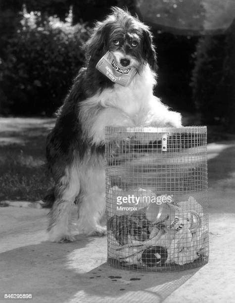 Pippin the famous TV dog has learnt the to clean up litter from the streets circa 1984