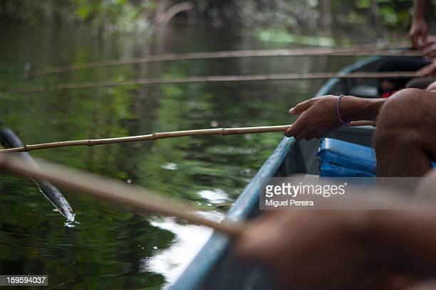 Piranha fishing in the Amazon