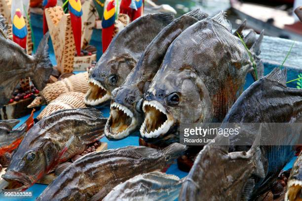 piranhas fish - regional handcraft exposed for sale a in fair in santarem, para state, brazil - lima animal stock pictures, royalty-free photos & images